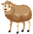 smiley sheep on white background vector image vector image