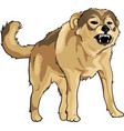 wild crazy dog vector image