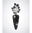 fresh carrot design vector image
