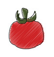 fresh tomato vegetable vector image