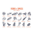 herbs and spices condiments 4 vector image