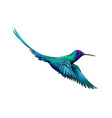 hummingbird from a splash of watercolor hand vector image vector image