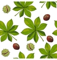 Aesculus Buckeye Horse chestnut Chestnut vector image vector image