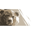 Angry brown bear vector image