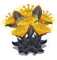 bouquet of black and yellow flowers vector image vector image