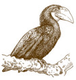 engraving female papuan hornbill vector image vector image