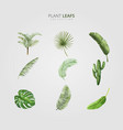 green plant leafs design vector image vector image