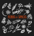 herbs and spices condiments 2 vector image vector image