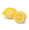 Hand drawn colored pencils lemon sketch with vector image