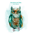 blue owl colorful watercolor exotic bird vector image