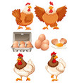 Chickens and fresh eggs vector image vector image