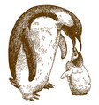 engraving drawing of emperor penguin and nestling vector image
