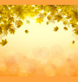 frame of yellow and orange leaves of maple sunny vector image