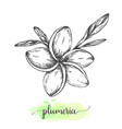 hand drawn plumeria flowers floral background vector image