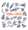 herbs and spices condiments 1 vector image