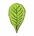 leaf freehand style vector image vector image