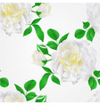 seamless texture white rose with buds and leaves vector image vector image