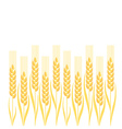 Gold wheat ion white background vector image