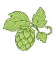 Hops ornament vector image vector image
