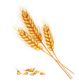 realistic wheat composition vector image vector image