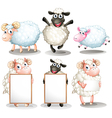 Sheeps and lambs with empty boards vector image