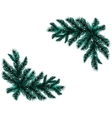Two realistic branch blue spruce Placed in the vector image vector image