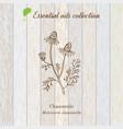chamomile essential oil label aromatic plant vector image vector image