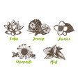 engraved organic herbs spices and flowers vector image