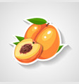 peach sticker cartoon sticker vector image vector image