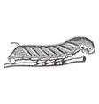 tobacco worm vintage vector image vector image