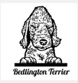 bedlington terrier - peeking dogs - breed face vector image vector image