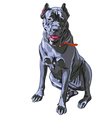 Black Cane Corso smiling Italian breed of dog vector image