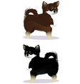 chihuahua dog black and white brown and white vector image vector image