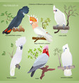 collection of realistic cockatoo vector image vector image