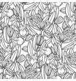 graphic jojoba pattern vector image
