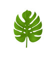 monstera branch isolated vector image vector image