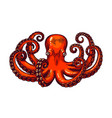 octopus engraving vintage color height detailed vector image vector image