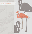 perfect card design with pink flamingo graphical vector image