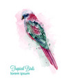 tropic colorful parrot bird watercolor vector image vector image