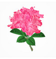 flowers pink rhododendrons twig vector image vector image