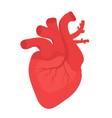 human heart icon flat style internal organs vector image