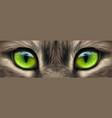 big eyes eyes a domestic cat close-up vector image vector image