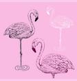 flamingo sketch vector image vector image