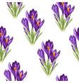 violet crocus flowers bouquet seamless pattern vector image vector image