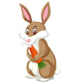 a rabbit eating carrot vector image vector image