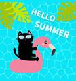 black cat floating on white flamingo pool float vector image vector image