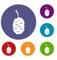 fruit of mulberry icons set vector image vector image