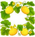 melon frame vector image