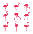 pink flamingo silhouetes isolated on white vector image vector image