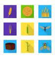 isolated object of wheat and corn symbol set of vector image